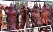 فروش حیوانات وحشی زنده را در بازارهای مواد غذایی متوقف کنید